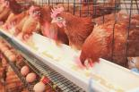 Jobs at Cumberlands Poultry Farm